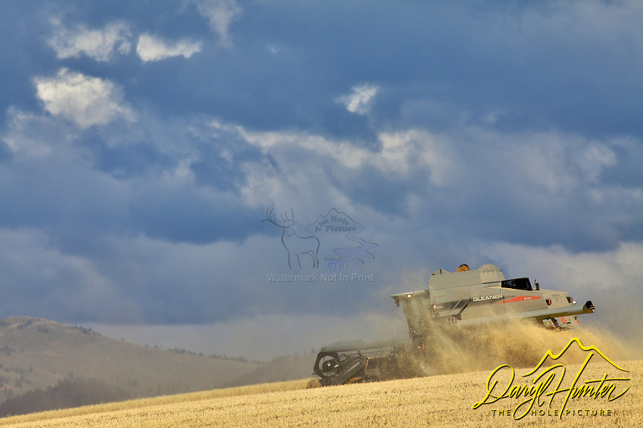 Combine harvesting grain in Idaho.