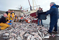 11-2-2011: Skippers John Paul O'Connor, Atlantic Fisher, Dingle  and Michael Flannery, Cuan Na Mara dump half eaten pollock and ling fish on Dingle Pier on Friday which he claims were attacked by seals while being hauled aboard his boat.  Also in picture are David O'Neill, Paul Gracea, Tony Brosnan, Brendan Devane, Stephen Mullaly, Larry Lyler.  The fishermen claim they lost thousands of euro on the catch alone and if something is not done about the seals they will dump their catch on the toruist office next time.<br /> Picture by Don MacMonagle