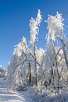 An Ice storm hit the Talimena Scenic Drive in Decemer 2013, which runs from Mena AR to Talihina Ok. The road travels within the Ouachita National Forest along the highest peaks of the Winding Stair Mountains, part of the Ouachita Mountain chain.