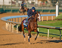 Union Rags , trained by Michael Matz and to be ridden by Javier Castellano exercises in preparation for the 2011 Breeders' Cup at Churchill Downs on November 1, 2011.