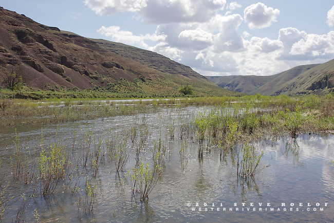 Willow submerged by spring runoff on the John Day River, Oregon.