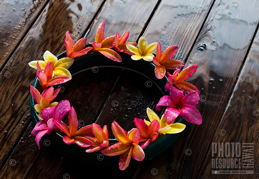 Ring of pink and yellow plumerias