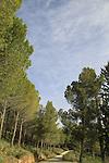 Israel, Upper Galilee, Naftali Mountains forest Scenic Road