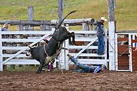 Rodeo_Bull Ride
