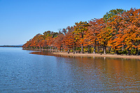 Colorful Cypress in Fall2 - Colorful fall cypress trees growing along bank on lake Nimrod in Arkansas in the National forest. This wilderness is full of tall pines, cypress, along with many colorful trees in autumn time. The cypress trees along the lake had that wonderful fall color of rusty reds and oranges as they line up along the banks of the lake. It was a wonderful fall scene with lot of color.