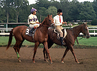 Tap Shoes (Riva Ridge - Bold Ballet) - three-time Grade I winner at Saratoga