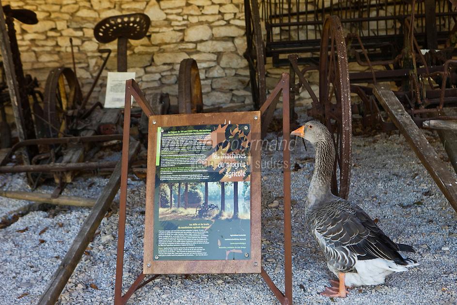 Europe/France/Midi-Pyrénées/46/Lot/Env de Sauliac-sur-Célé/Cuzals: Musée de plein air du Quercy,Oie visitant l'exposition sur le matériel agricole