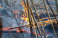 May 2018: A bamboo structure stet afire from the Kilauea Volcano eruption in Leilani Estates, Puna, Big Island of Hawai'i.