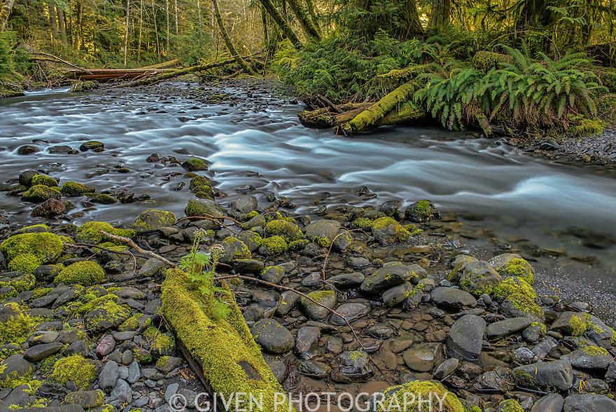 Barnes Creek, Olympic National Park, Washington