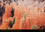 Fairyland Hoodoos, Late Afternoon, Fairyland Canyon, Bryce Canyon National Park, Utah