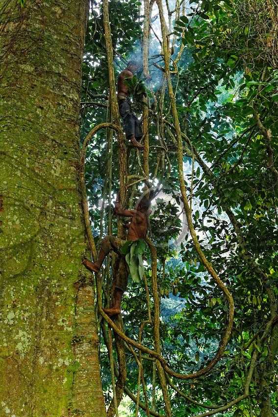 Using the lianas, two honey-hunters climb a tree called the Dabéma. For the pygmies, it is a sacred tree, the tree of the ancestors. For the introduction of the youths to the Bolobes devils, a young man settles himself between the tree's buttress roots and spends the night there to enter into contact with the ancients who teach him the secrets of the forest. The bark from this tree is used to sooth dental cavities.///Deux chasseurs montent aux lianes accrochées à un arbre nommé Dabéma. Pour les pygmées, c'est un arbre sacré,  l'arbre des ancêtres. Pour l'initiation des jeunes aux diables Bolobés. Le jeune est installé entre les contreforts de l'arbre pour y passer la nuit et entrer en contact avec les anciens qui lui enseignent les secrets de la forêt. L'écorce de cet arbre est utilisée pour soulager les caries dentaires.