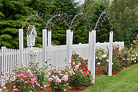 White fence with roses and sculpture. Heirloom Gardens, Oregon