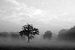 Europa, DEU, Deutschland, Nordrhein Westfalen, NRW, Niederrhein, Rheinland, Grefrath, Spaetsommer, Morgens, Nebel, Dunst, Typische Landschaft, Kategorien und Themen, Natur, Umwelt, Landschaft, Jahreszeiten, Stimmungen, Landschaftsfotografie, Landschaften, Landschaftsphoto, Landschaftsphotographie, Wetter, Wetterelemente, Wetterlage, Wetterkunde, Witterung, Witterungsbedingungen, Wettererscheinungen, Meteorologie, Wettervorhersage<br /> <br /> [Fuer die Nutzung gelten die jeweils gueltigen Allgemeinen Liefer-und Geschaeftsbedingungen. Nutzung nur gegen Verwendungsmeldung und Nachweis. Download der AGB unter http://www.image-box.com oder werden auf Anfrage zugesendet. Freigabe ist vorher erforderlich. Jede Nutzung des Fotos ist honorarpflichtig gemaess derzeit gueltiger MFM Liste - Kontakt, Uwe Schmid-Fotografie, Duisburg, Tel. (+49).2065.677997, archiv@image-box.com, www.image-box.com]