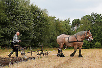 Leusden -  De Stichting Behoud Oude Werktuigen organiseert de jaarlijkse Oogstdag op landgoed Den Treek. Man loopt achter een ploeg. Werkpaard trekt de ploeg