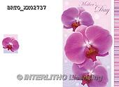 Alfredo, FLOWERS, BLUMEN, FLORES,  photos+++++,BRTOXX02737,#F#