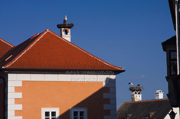 White Stork, Ciconia ciconia, adults on nest on roofs of Rust city, Rust, National Park Lake Neusiedl, Burgenland, Austria, April 2007