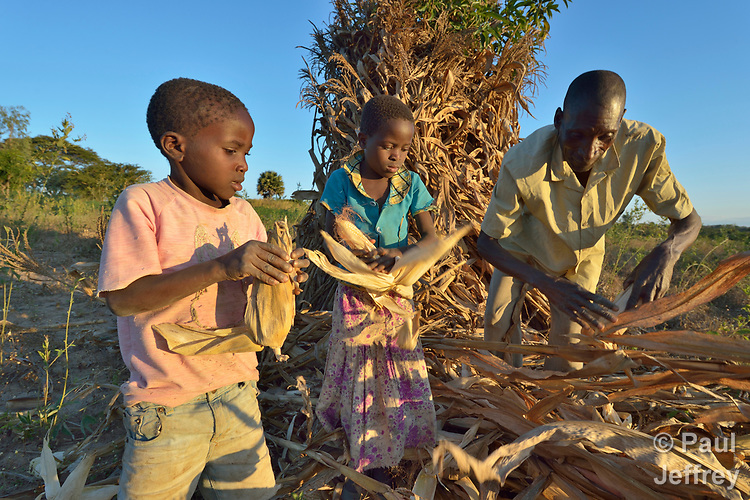 Joseph Nkhoma and his daughter Beauty, 8, and son Sibosiso, 5, shuck corn they have harvested on their farm in Edundu, Malawi. They and other farmers in the village have benefited from intercropping and crop rotation practices they learned from the Malawi Farmer-to-Farmer Agro-Ecology project of the Ekwendeni Mission Hospital AIDS Program, a program of the Livingstonia Synod of the Church of Central Africa Presbyterian.