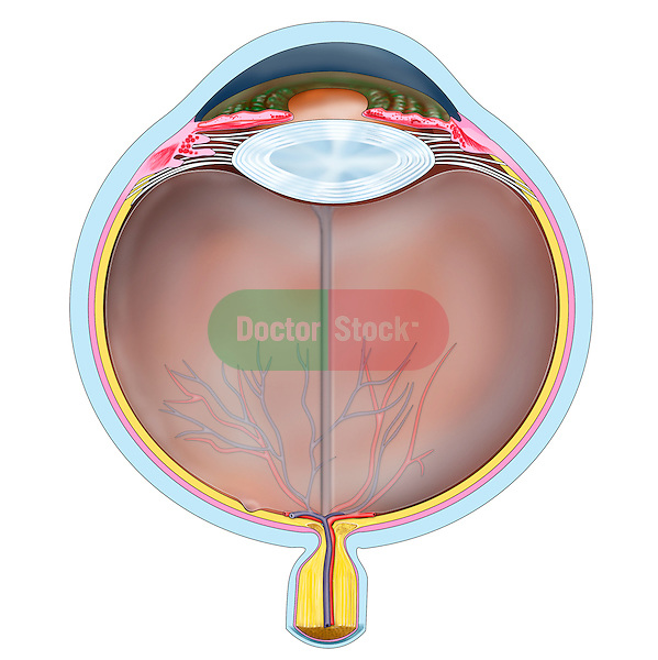 horizontal section eye