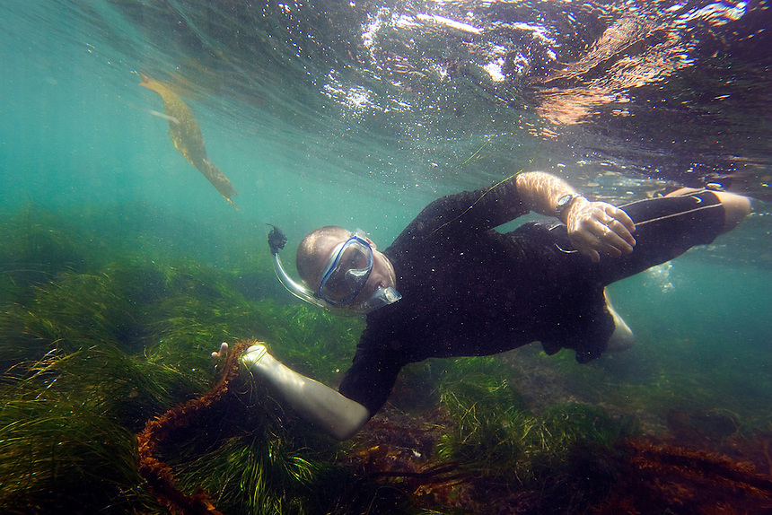 A man snorkels near star fish and other sea life in the Pacific Ocean off the coast of Windansea beach in La Jolla, San Diego, California on a summer day.