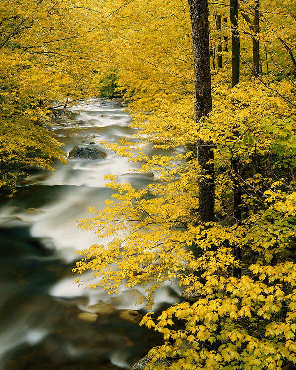 Fall color scene along the Middle Prong of the Little River; Great Smoky Mountains National Park, TN