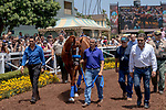"""ARCADIA, CA  JUNE 23: Justify and exercise rider Humberto Gomez, groom Eduardo Luna and asst. trainer Jimmy Barnes enter the paddock in front of the fans on """"Justify Day"""" on June 23, 2018 at Santa Anita Park in Arcadia, CA.  (Photo by Casey Phillips/Eclipse Sportswire/Getty Images)"""