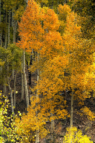 Fall has arrived at Kolob Terrace near Zion National Park, Utah