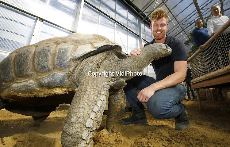 Foto: VidiPhoto<br /> <br /> RHENEN – De 31 Aldabra schildpadden van Ouwehands Dierenpark in Rhenen hebben een gloednieuw tropisch verblijf. Donderdag werd dat onder grote belangstelling geopend. Ouwehands heeft de grootste collectie reuzenschildpadden ter wereld.De Aldabra is de grootste landschildpad die er bestaat. Ze kunnen 170 kilo zwaar en 80 jaar oud worden. De oudste en bekendste schildpad van Ouwehands is Sjaak (41 jaar en ruim 100 kilo). Hij laat zich graag aaien door de verzorgers. In het verblijf is het constant 29 graden, met een hoge luchtvochtigheidsgraad. Aldabra schildpadden werden in de tijd van de VOC meegenomen als voedsel aan boord omdat ze bijna een jaar zonder voedsel en water kunnen. Foto:  Dierverzorger Erik knuffelt met Sjaak.<br />  Rechts dierentuineigenaar Marcel Boekhoorn.