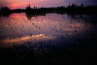 Evening shadows reflect the last rays of light on a sultry summer evening in Chesser Prairie of the Okefenokee National Wildlife Refuge.