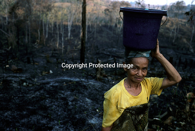 An Ethnic Dayak woman carryng a bucket with water along a burned down forest on February 25, 1998 at Samarinda, Borneo, Indonesia. Big forest fires are lit every year in these ares and the smoke spreads trough a large area in the province..(Photo: Per-Anders Pettersson / Liaison Agency)