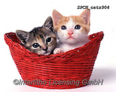 Xavier, ANIMALS, REALISTISCHE TIERE, ANIMALES REALISTICOS, cats, photos+++++,SPCHCATS904,#a#, EVERYDAY