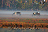 Bob, ANIMALS, REALISTISCHE TIERE, ANIMALES REALISTICOS, horses, photos+++++,GBLA4462,#a#, EVERYDAY