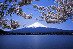 Mt. Fuji with cherry blossoms.<br /> <br /> Mt. Fuji avec des fleurs de cerisier.