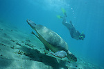 Mayotte Swimming with turtles