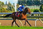 TORONT,CANADA-SEP 14: Old Persian #1,ridden by James Doyle,wins the Northern Dancer Turf at Woodbine Race Track on September 14,2019 in Toronto,Ontario,Canada. Kaz Ishida/Eclipse Sportswire/CSM