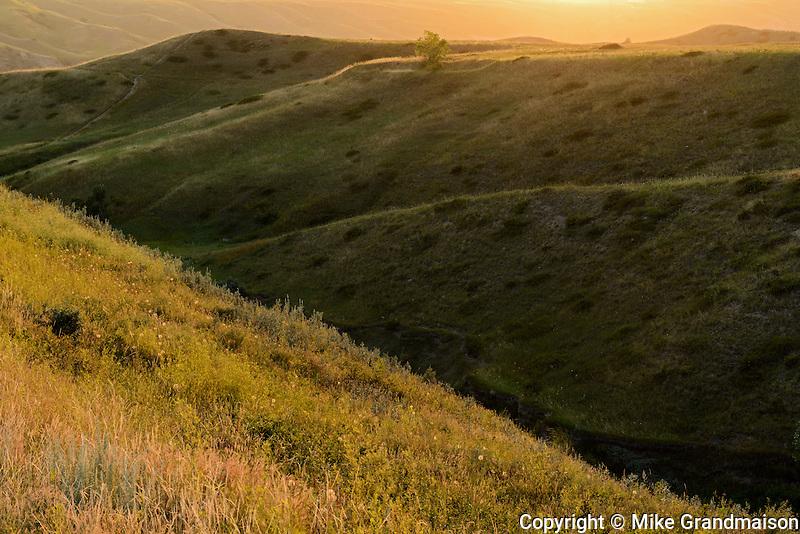 Rolling hills at sunset<br /> Lethbridge<br /> Alberta<br /> Canada