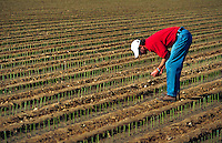 A commercial rose farmer monitors his field for its moisture content.