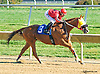 Joey Whispers winning at Delaware Park on 10/12/15