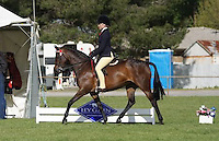 Champion Rider 12-15