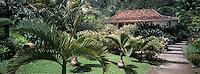 France/DOM/Martinique/Balata/Les jardins: Palmiers