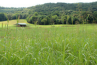 A farm barn shade and hills seen from distance through lush green crops - Free Stock Photo.