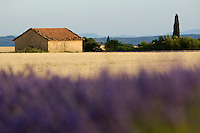 Farmhouse in a harvested wheat field surrounded by lavender fields at summer, Valensole, Provence, France.