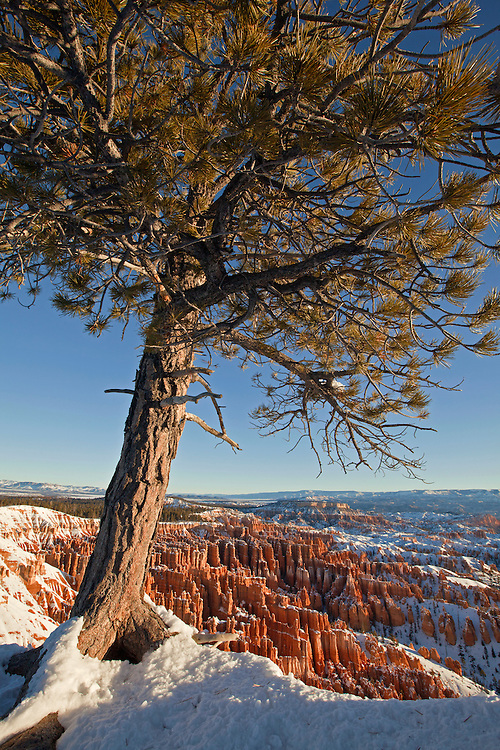 View of the Bryce Amphitheater from the Rim Trail at Bryce Canyon National Park, Utah, USA