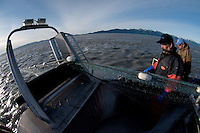 Fishing on the Copper River Delta, Cordova, Alaska, US