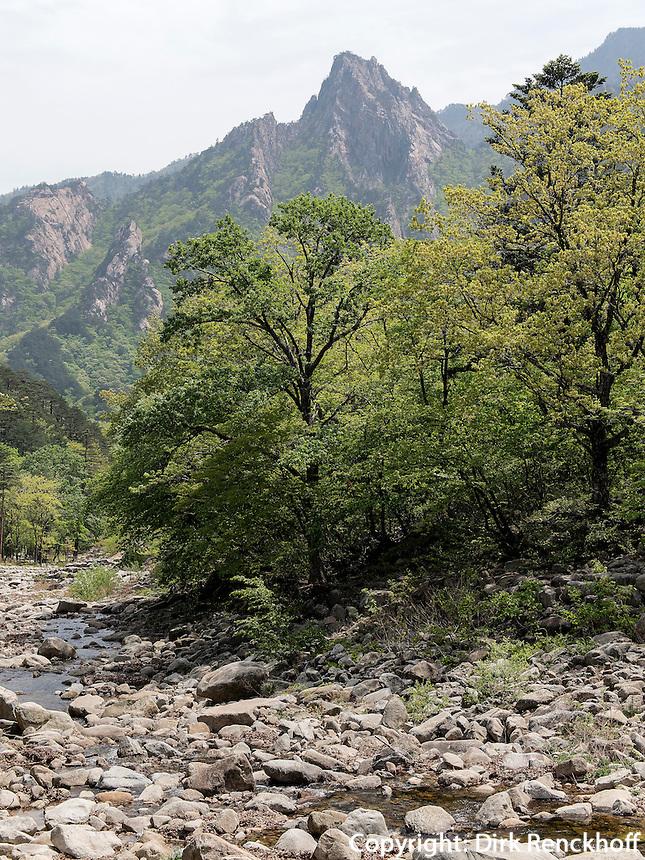 Bach im Nationalpark Seoraksan bei Sokcho, Provinz Gangwon, S&uuml;dkorea, Asien, UNESCO-Biosph&auml;renreservat<br /> creek in Seoraksan National Park  near Sokcho, province Gangwon, South Korea, Asia, UNESCO Biosphere reserve