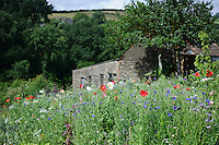 General view across Pictorial Meadow Mix
