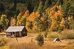 Cabin in a meadow by an aspen grove, autumn, Alpine Co., Calif.