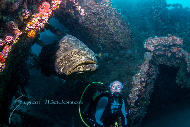 Erin-United Caribbean Wreck w Goliath ; Colorful Wreck; Florida Atlantic Diving; Goliath Grouper; Photographing underwater in current and bad viz; SE Scuba Diving; Underwater Modeling; Wide Angle; Wrecks-Model Erin Broadus
