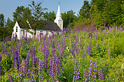 Lupine Festival (an annual event) in Sugar Hill, New Hampshire USA. St. Matthew's Chapel is in the background. The Gothic Revival style St. Matthew's Church was built in 1893.