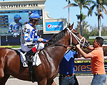 HALLANDALE BEACH, FL - MAR 3:  Maraud #2 with jockey John Velazquez on board, gets cleaned up for the winners' circle after winning the Palm Beach G3 Stakes, at Gulfstream Park on March 3, 2018 in Hallandale Beach, Florida. (Photo by Liz Lamont/Eclipse Sportswire/Getty Images)