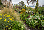 Indianola, WA: Summer perennial garden featuring yarrow, daylilies and grasses